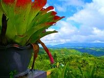 Garnek roślina i widok Fotografia Royalty Free