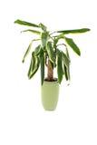 garnek roślinnych Zdjęcia Royalty Free