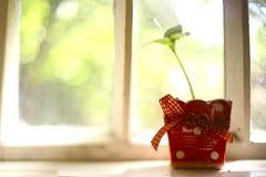 Garnek rośliny flanca w ceramicznej czerwonej polki kropce Zdjęcia Royalty Free
