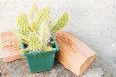 Garnek z kaktusem zdjęcia stock