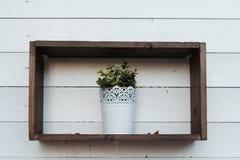 Garnek z rośliną na półce Zdjęcia Stock