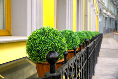 Garnek z roślinami Fotografia Stock