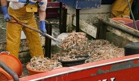 Garnele auf dem Boot Stockbild