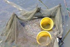 Garnelen werden in den Netzen gefangen Lizenzfreie Stockfotografie