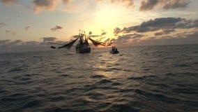 Garnelenboot bei dem Sonnenaufgang stock footage