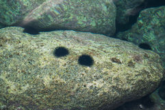 Garnements de la Mer Noire Image stock