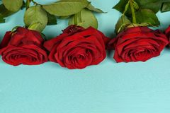 Garnering av härliga röda rosor på en blå bakgrund Arkivfoto