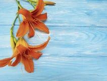 Garnering för härlig orange sommar för lilja säsongsbetonad en blå trätappningnattvardsgång Royaltyfri Bild