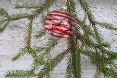 Garnering för jul och för nytt år med granfilialer och bollintelligens Arkivbilder