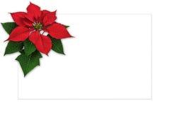 Garnering för julstjärna för julhälsningkort med kopieringsutrymme Arkivbilder