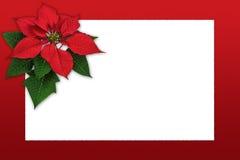 Garnering för julstjärna för julhälsningkort med kopieringsutrymme Fotografering för Bildbyråer