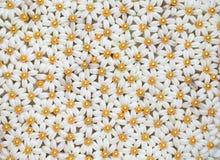 Garnering för vit blomma i thailändskt Royaltyfria Bilder