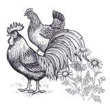 Garnering med fågeln och blommor Realistisk hand som drar den hönshönan och tuppen, och kamomill som isoleras på vit bakgrund stock illustrationer