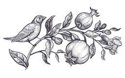 Garnering med fågeln och blommor Realistisk handteckningsnäktergal och filial med granatäpplet som isoleras på vit bakgrund royaltyfri illustrationer