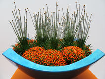 Garnering med orange bär i en blå vas Royaltyfri Bild