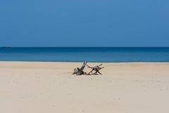 Garnering på stranden Royaltyfri Foto
