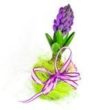 garneringhyacint Royaltyfria Bilder