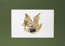garneringramgreen Royaltyfri Bild
