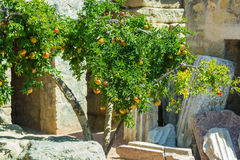 Garnet arbour with grenades and leaves. A b c Royalty Free Stock Images