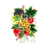 Garnet figs grapes painting on white background. Vector illustration Royalty Free Stock Image