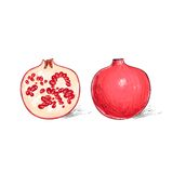 Garnet fruit pomegranate sketch draw isolated over Royalty Free Stock Photo