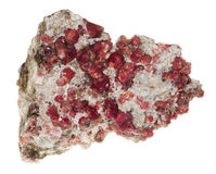 Garnet red. Raw mineral for the processing as jewellery on white background stock photography