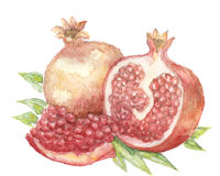 The garnet watercolor  painting watercolor  Stock Image