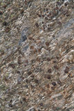 Garnets. In slate rock, outdoors in the Austrian Alps Royalty Free Stock Photography