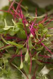 Garnish. A mixture of lettuce leaves creating an interesting garnish Stock Photos