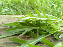 Garnish bio source detox leaves wood Stock Photo