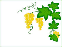 Garnish with clusters of grapes. Stock Photography