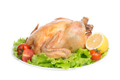 Garnished roasted thanksgiving chicken on a plate Royalty Free Stock Photos