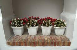 4 garnka z kwitnącymi czerwieni i białych kwiatami na ścianie Zdjęcia Stock