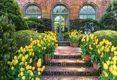 Garnki Żółci tulipany zdjęcia stock