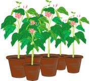 garnki roślinnych Zdjęcia Royalty Free