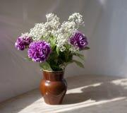 Garofani lilla Fotografia Stock