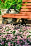 Garofano decorativo del giardino sui precedenti di un banco di legno nel parco fotografia stock