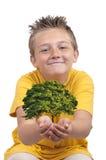 Garçon avec l'arbre dans la paume Photos stock