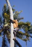 Garçon sur l'arbre, Kizimbani, Zanzibar, Tanzanie Image libre de droits