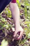 Garçon tirant vers le haut le champignon de morelle Image stock