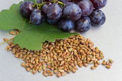 Garpe Seed Royalty Free Stock Images