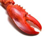 Garra da lagosta Fotografia de Stock