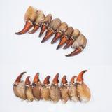 Garra del cangrejo Imagen de archivo libre de regalías
