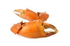 Garra del cangrejo en el fondo blanco Imagen de archivo