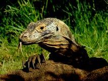 Garra del dragón foto de archivo
