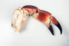 Garra do caranguejo em uma placa Foto de Stock Royalty Free