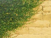 Garra dos gatos em uma parede amarela Fotos de Stock Royalty Free