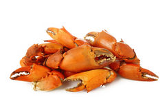 Garra hervida del cangrejo Foto de archivo libre de regalías