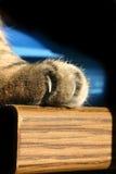 Garra peligrosa del gato fotografía de archivo libre de regalías