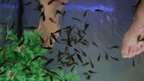 Garra rufa鱼自然疗法 影视素材